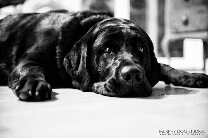 Best-of-2009-pet-photography-24